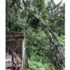 風雨で折れた木