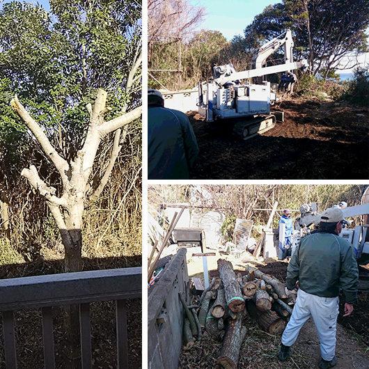枯れ木を伐採