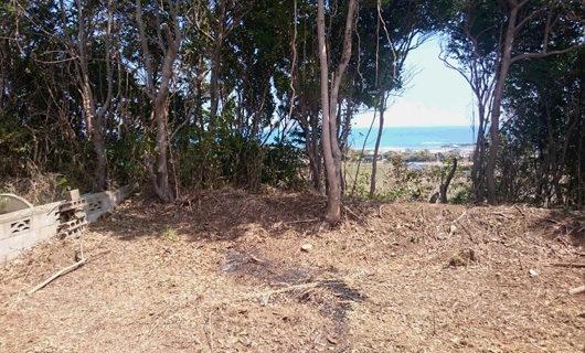 庭側も枯れ木を整理