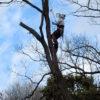 里山の木を伐採