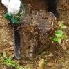 チェーンソーで木の切り株を取る