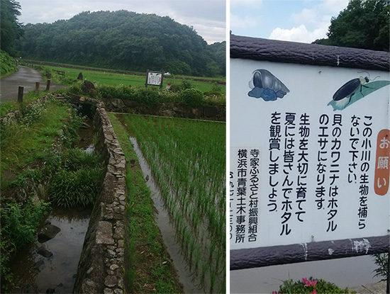 寺家ふるさと村の小川とホタルの看板