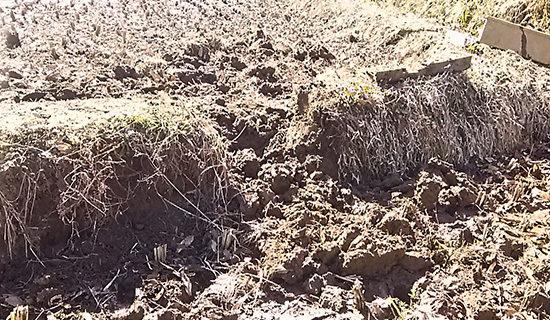 モグラの穴が貫通した部分の畔を壊す