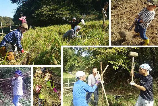 稲刈りの作業