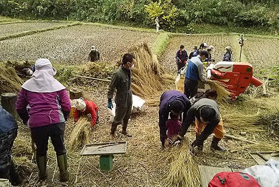 脱穀の作業