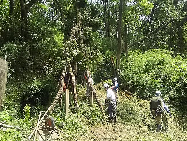 折れた木を処理する作業