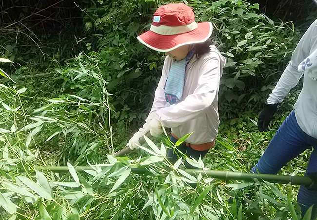 はさがけ用の竹の枝葉を棍棒で叩き落とす