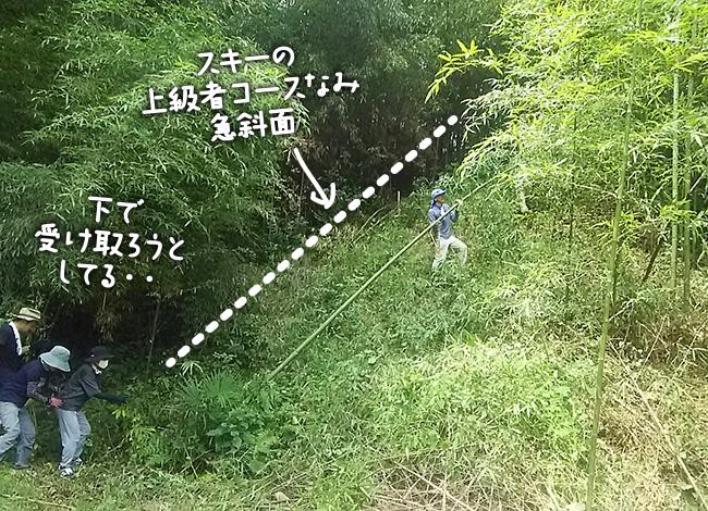 スキーの上級者コースなみ急斜面の山から竹取り