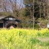 寺家ふるさと村の水車と菜の花